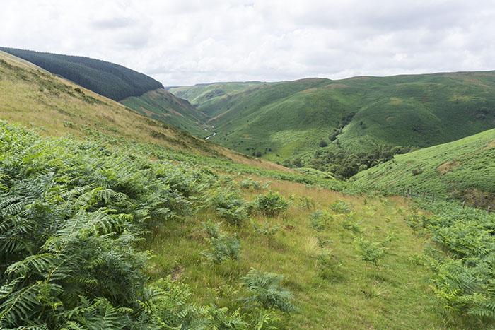 Lush Rhandirmwyn valley view
